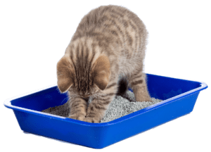 cat litter box-small